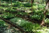 Horiticulture and Nursery